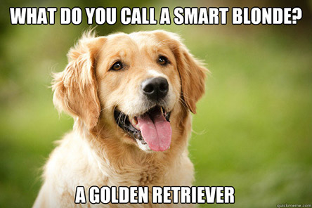Golden Retriever Products